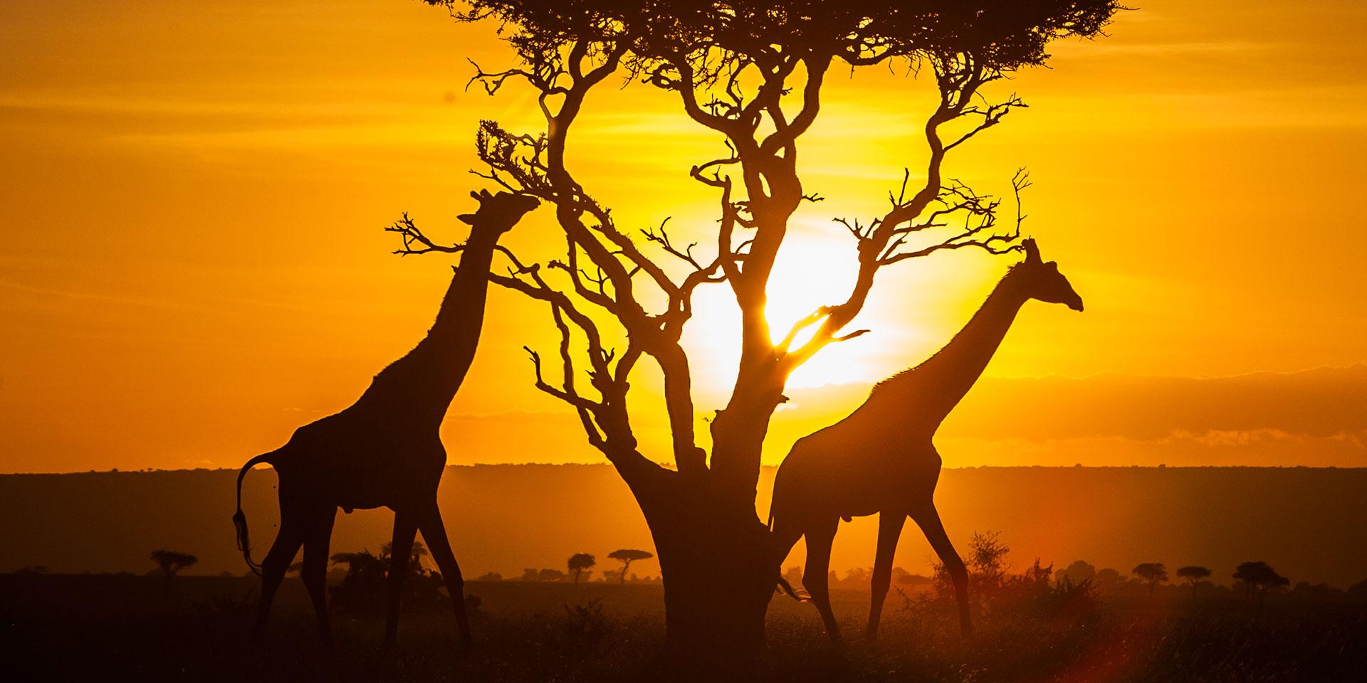 4 Travel Tips For Visiting Kenya